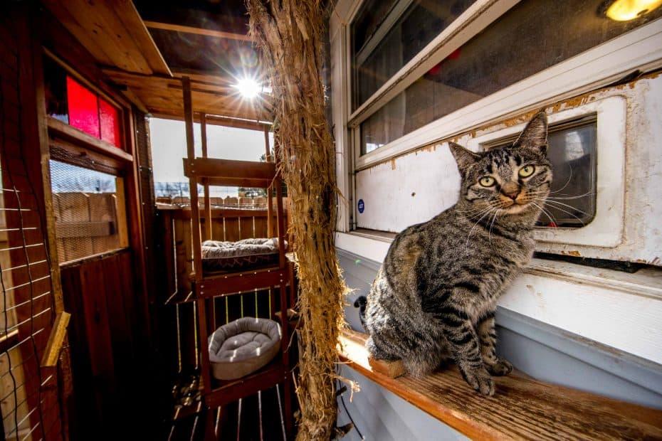 cat in outdoor cat enclosure
