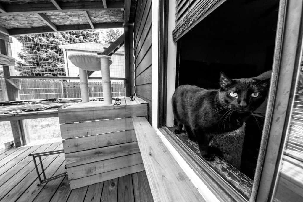black and white photo of cat in catio