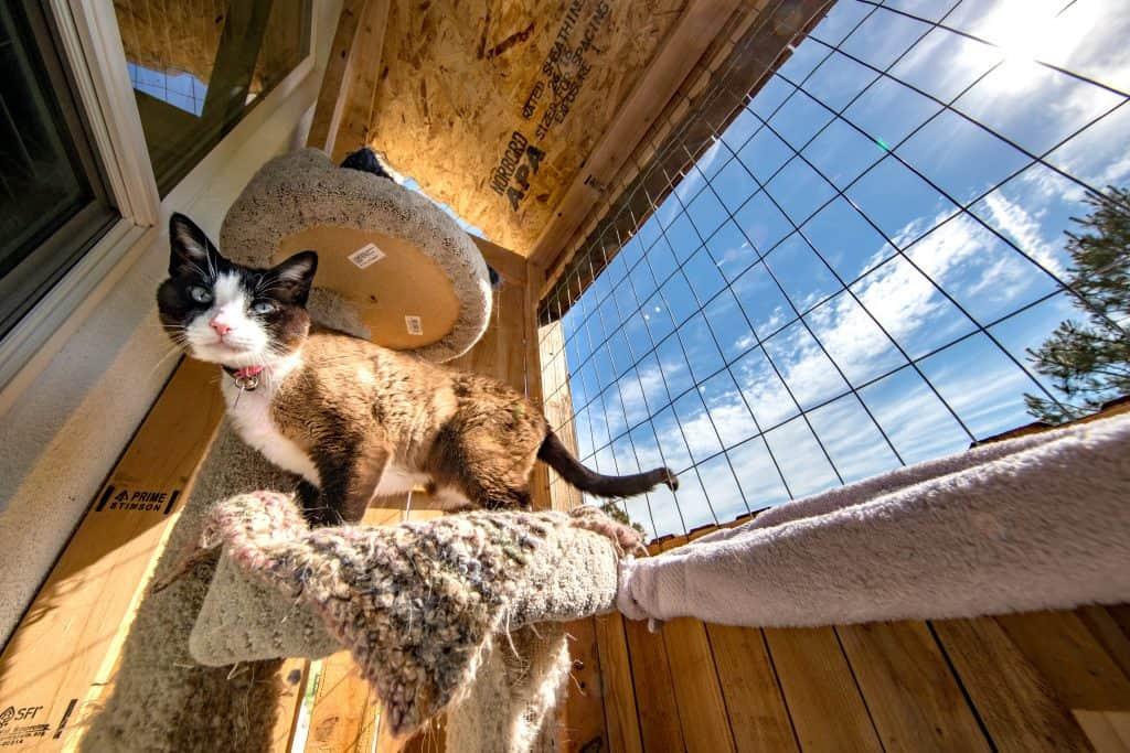 cat on outdoor cat tree catio