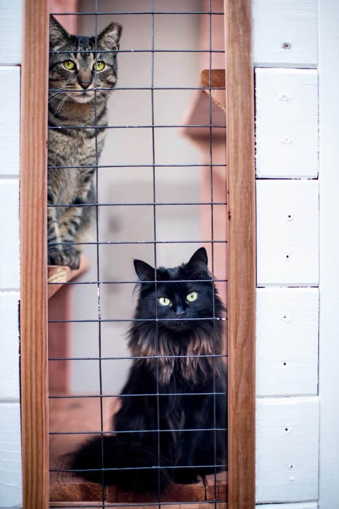 cats protected in catio