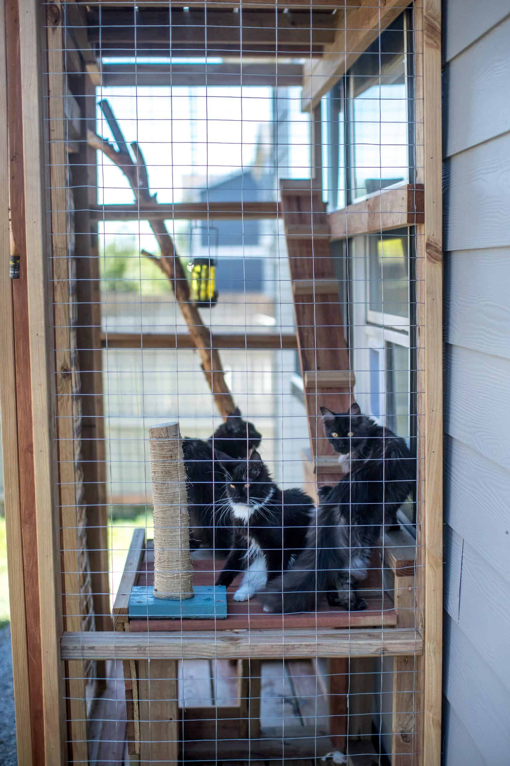 catio for mainecoons