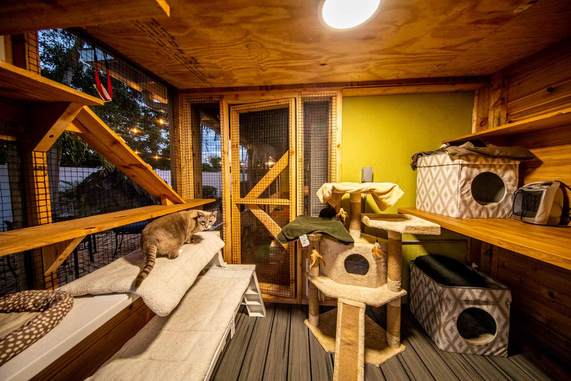 interior custom cat house build in miami florida