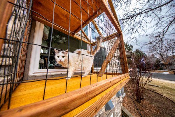 white cat in window catio