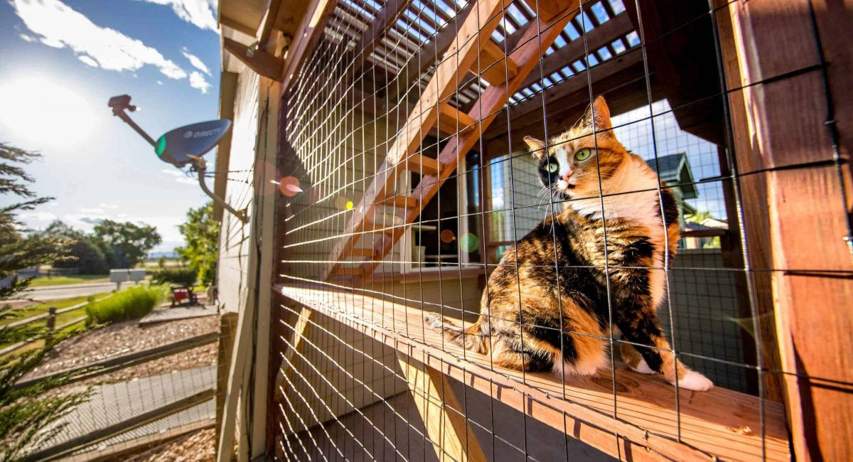 calico cat in catio